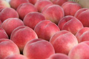 山梨の桃の販売